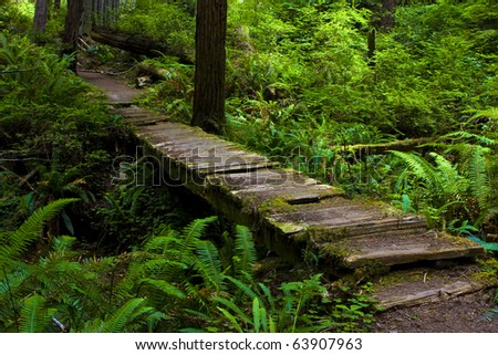 Aged bridge in redwoods
