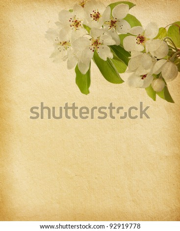 aged paper texture with apple  blossom