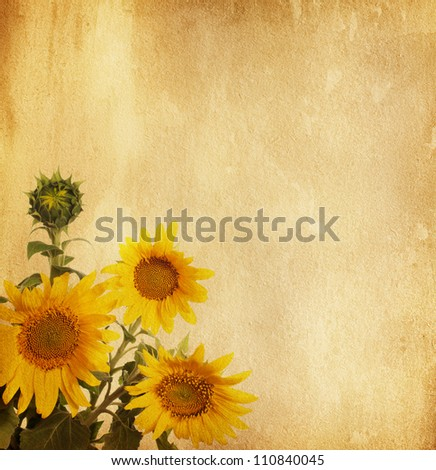 aged paper texture with sunflowers