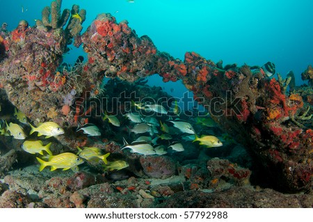 Aggregation of fish on a reef.  Picture taken in Broward County, Florida.
