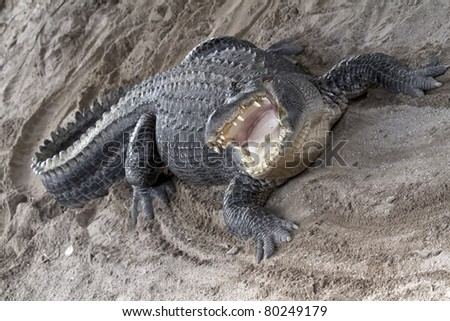 Aggressive alligator with mouth wide open