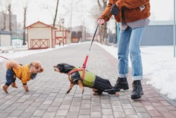 Aggressive, disobedient dog problems concept. Woman holding her disobedient dachshund on a leash, dog trying to attack another dog at a park