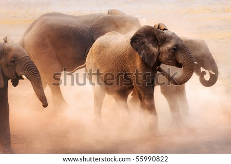 Agitated elephants creating a lot of dust in Etosha desert