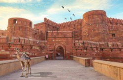 Agra Fort known as the red fort Agra is a medieval red sandstone fort viewed at sunrise with a camel near the entrance used for pleasure rides for tourists