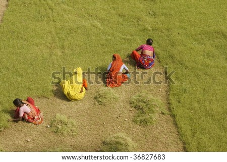AGRA, INDIA - APRIL 6: Group of unidentified Indian woman cut  grass by hand at the Taj Mahal on April 6, 2009 in Agra, Uttar pradesh, India.