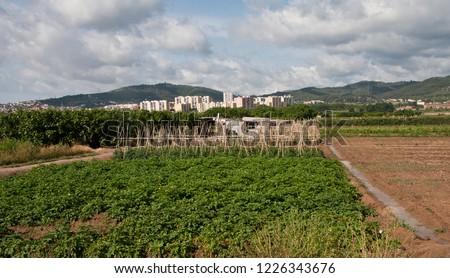 agrarian park of the Baix Llobregat. Rural farming area in Sant Boi de Llobregat, province of Barcelona. Spain. In the back neighborhood of La Cooperativa de San Boi