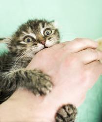 Agressive kitten