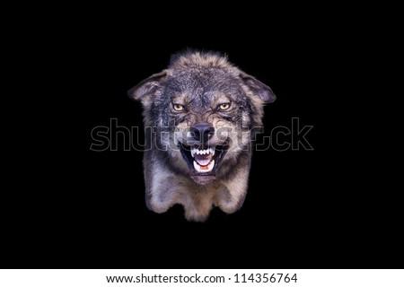 agressive wolf stuffed