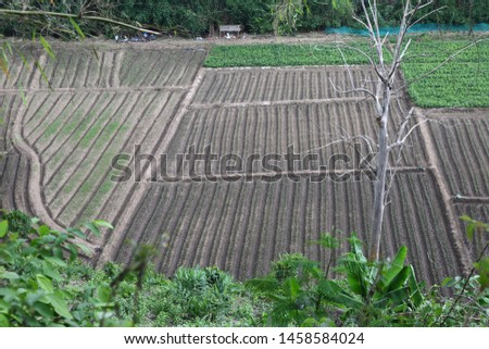 Agricultural areas in rural areas of Chiang Mai, Thailand.