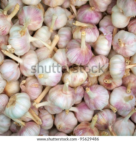 agricultural background, a beautiful garlic