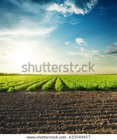 agricultural black and green fields and sunset in clouds