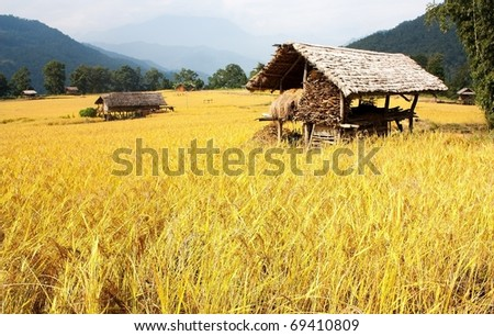 agricultural countryside in nepal