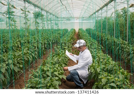 Agricultural Engineer In Green House For Quality Control