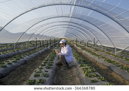 Agricultural engineer working in the greenhouse. Organic agriculture in greenhouses.