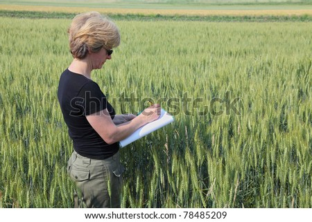 Agricultural expert inspecting quality of wheat