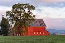 Agricultural farmground near Salem Oregon where a red barn and oak tree stands out against green field and cloudy sky highlighted by the morning sun.