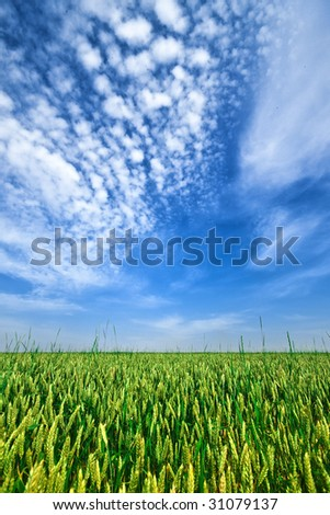 Agricultural field and beautiful sky