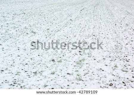 Agricultural field covered by snow