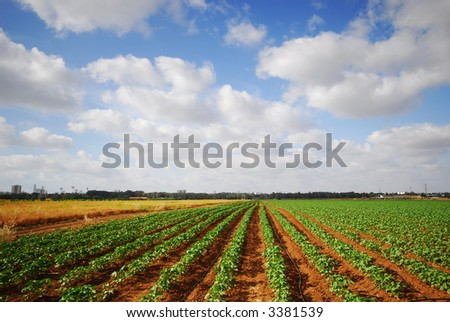 Agricultural field in farm,  on a beautiful day. Place for text on top.