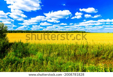 Agricultural field on a clear summer day. Sunny day on agricultural field. Agriculture farm field landscape