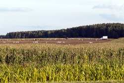 agricultural field on which people independently harvest potatoes with their own forces and means
