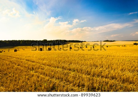Agricultural field on which wheat is cleaned