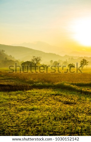 Agricultural field with morning sunlight, Thailand. #1030152142
