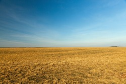 agricultural field with yellowing grass dying in the autumn season, Photo of landscape, blue sky in the background