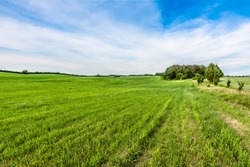 Agricultural green field and rural road in the summer, landscape