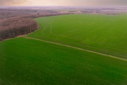 Agricultural green field: sprouts of grain crops in early spring. Growing wheat and barley on a farm field in spring - aerial Drone Shot.