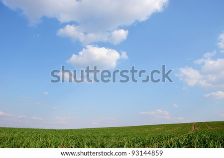 Agricultural green fields in spring on the background of blue sky.