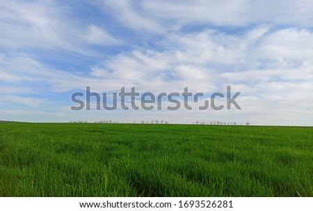 agricultural green view with clouds and grass Stock fotó ©