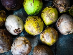 Agricultural harvesting of coconut. Close up of tripical fruit young and dry brown coconut.