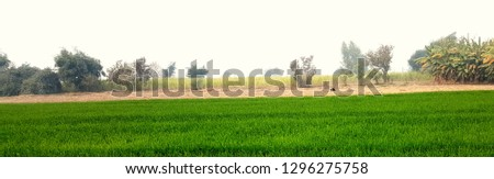 Agricultural Lands and landscape with small botany and plants view here you can fine many more old villages and old trend of agricultural methods. Tree are also beautiful with plants and botany. #1296275758