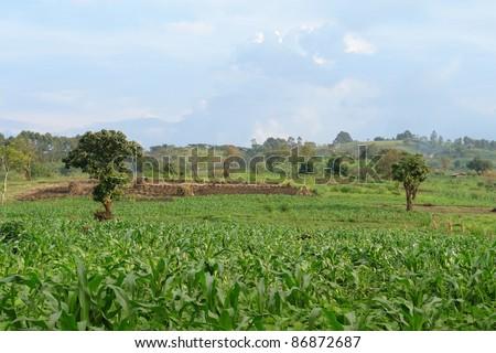 agricultural landscape around Rwenzori Mountains in Uganda (Africa) - stock photo