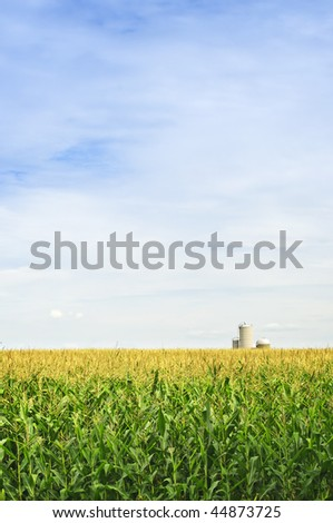 Agricultural landscape of corn field on small scale sustainable farm with silos