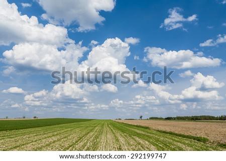 agricultural landscape  plowed...