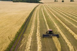 Agricultural landscape. The harvest of grain. The edge of the field. The Reaper mows the wheat. The view from the top. Shooting from a drone.