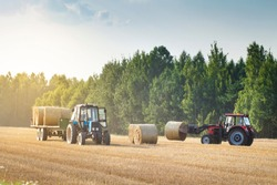 Agricultural machinery on a chamfered golden field moves bales of hay after harvesting grain crops. Tractor loads bales of hay on trailer. Harvest concept