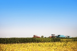 Agricultural machines in a soy field in a bright sunny summer day. Harvest time.