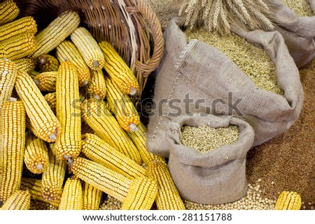 Agricultural product assortment, corn cob in basket, cereals in sacks