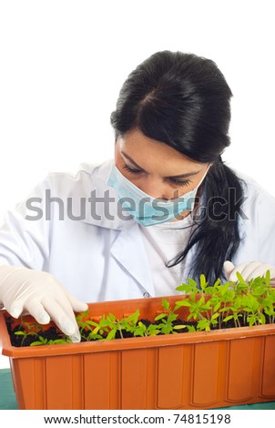 Agricultural researcher woman checking new plants of tomatoes in a big pot in soil isolated on white background