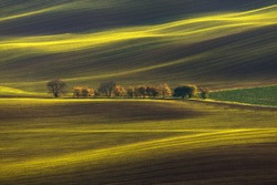 Agricultural Rolling Spring / Autumn Landscape.Natural Landscape In Brown And Yellow Color. Waved Cultivated Row Field And Tree. Striped Undulating Unreal Abstract Plowed Field In South Moravia
