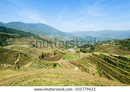 agricultural scenery of the longji rice terraces in guangxi province, China