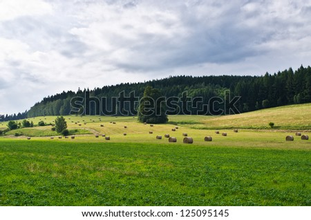 Agricultural scenery with meadow on first plan