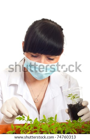 Agricultural scioentist with cultivated tomatoes plants in laboratory isolated on whiet background