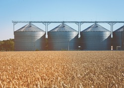 Agricultural Silo, foregro plantations. Set of storage tanks cultivated agricultural crops processing plant. Building Exterior, Storage and drying of grains, wheat, corn, soy, hay