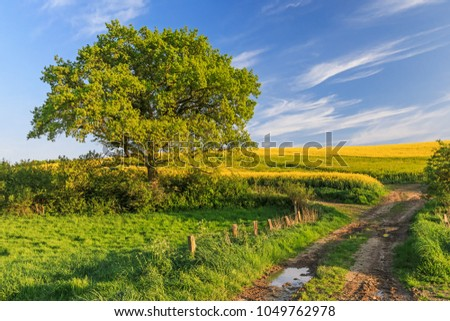 Agricultural spring landscape with meadow, canola field, oak and farm track in Schleswig-Holstein, Germany. #1049762978