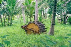 Agricultural tool. An old and heavy plow cultivator (rearer) for rice fields is abandoned in a palm grove. Sri Lanka