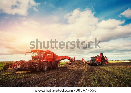 Agricultural vehicle harvesting sugar beets Stockfoto ©
